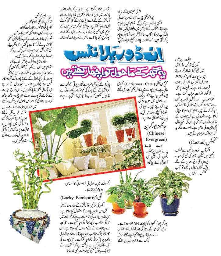 Indoor Plants At Home Makes You Feel Better Pakistan
