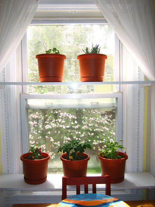 Идеи для домашних цветов